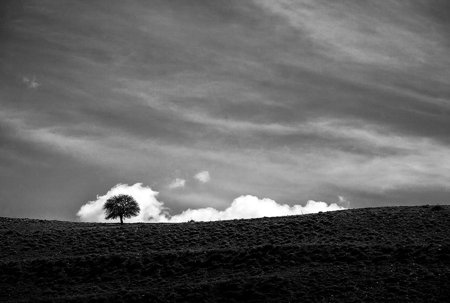 Ali Shokri iranian landscape and nature photographer