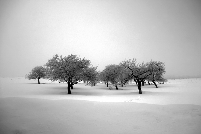 Ali Shokri Photography Trees Photo